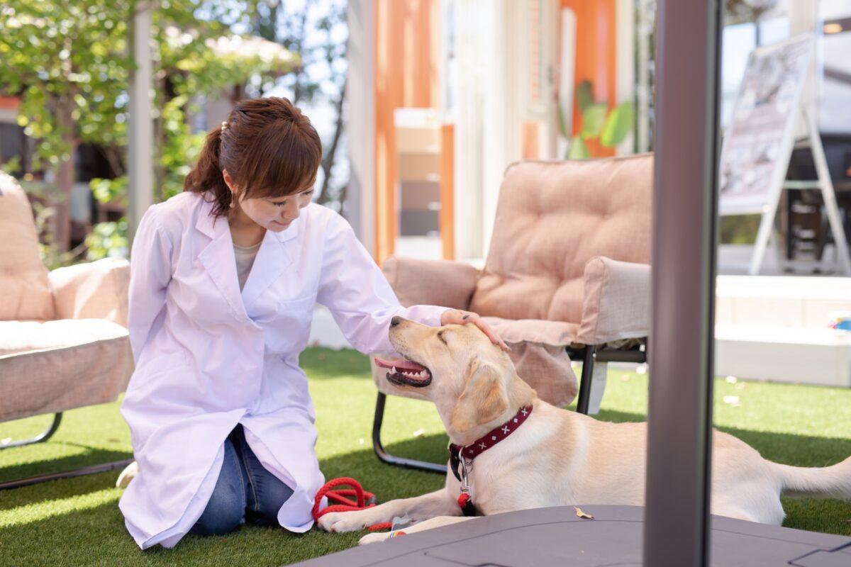動物看護士・動物介護士に関する資格・通信講座・学びの情報