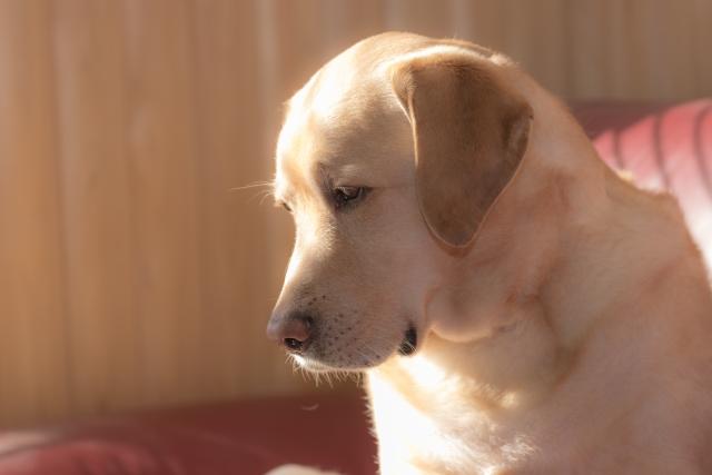 【動物・ペット】に関する資格・通信講座・学び情報を紹介